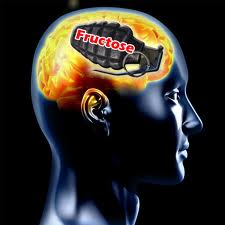 fructose-makes-your-brain-dull